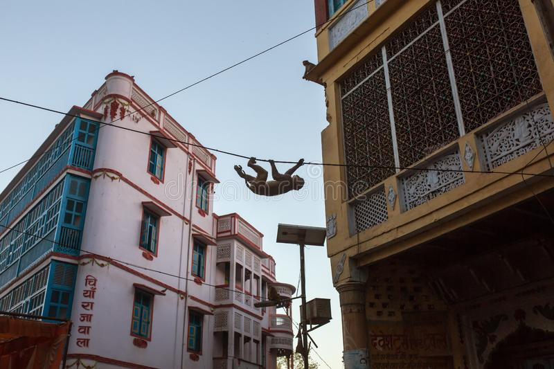 Monkey hanging on city streets wires in Vrindavan. India stock photography