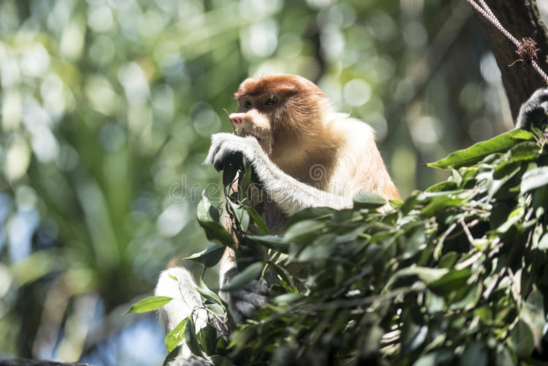 Monkey having his meal royalty free stock image