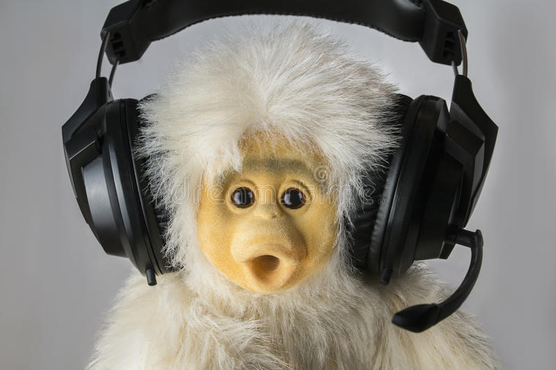 Monkey at headphones. Cheerful monkey headphones broadcasting information into a microphone stock photos