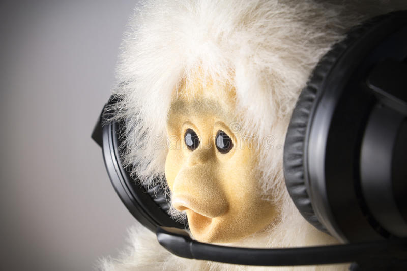 Monkey at headphones. Emotional monkey headphones, microphone broadcasts information royalty free stock photo