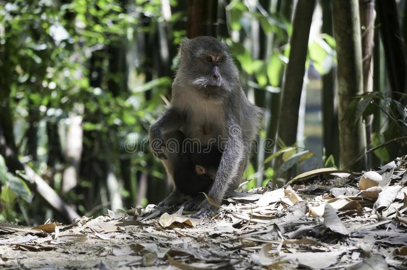 a monkey with his baby in the jungle stock images