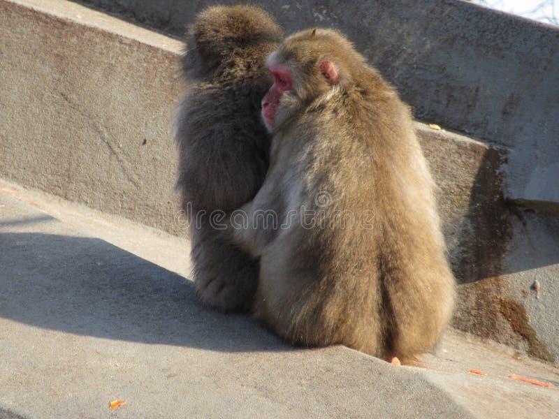 Monkey Hug stock image