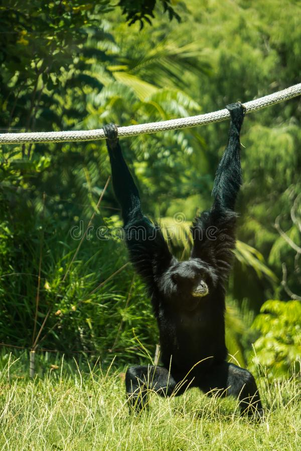 Monkey intorno fotografia stock