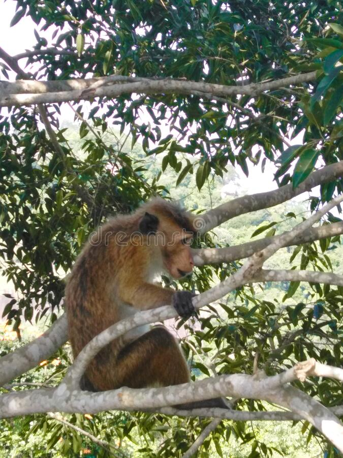 A monkey in a jungle stock photos