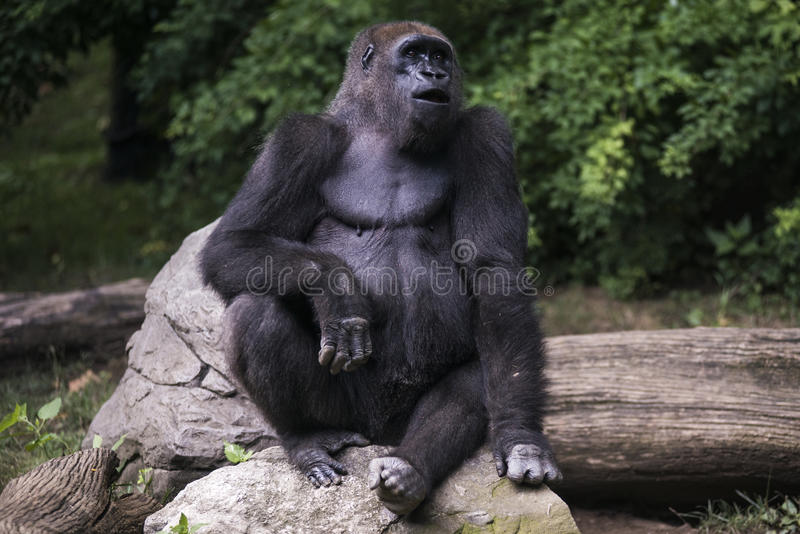 Monkey in the Jungle royalty free stock photos