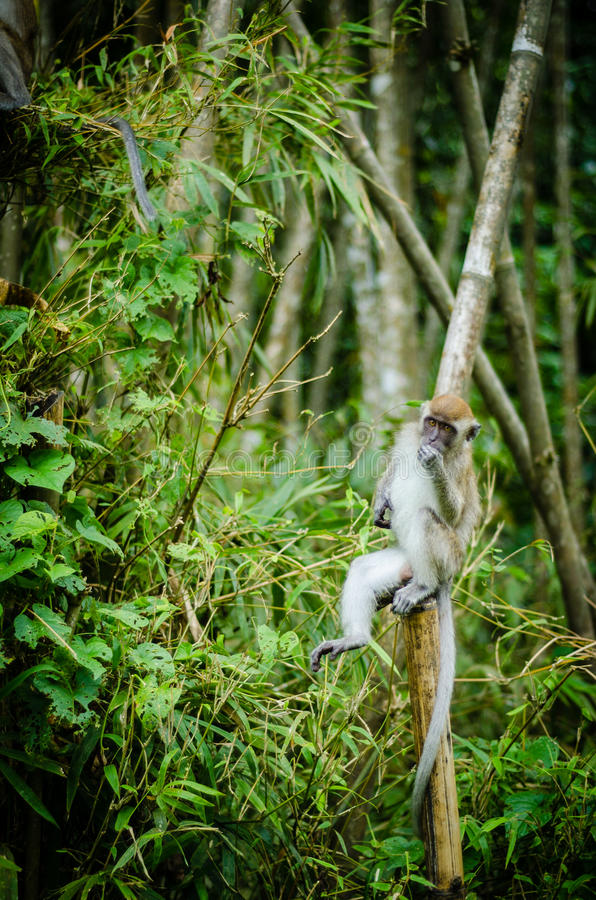 Monkey in jungle stock photos