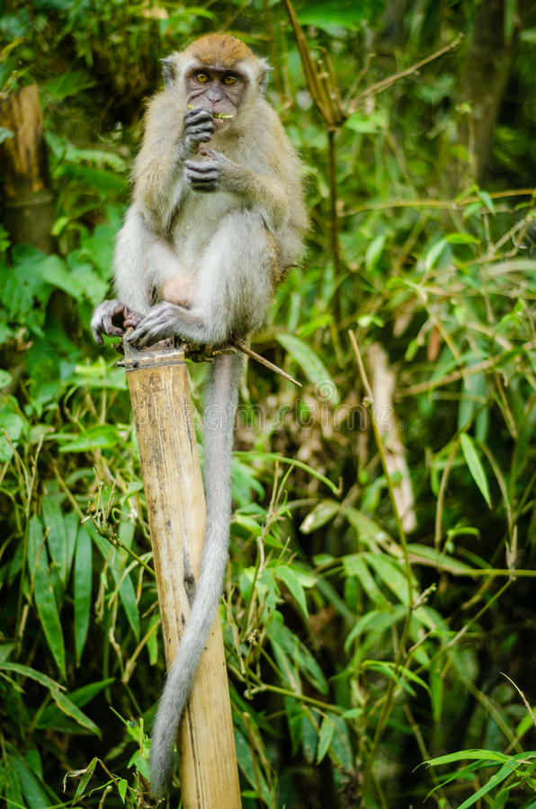 Monkey in jungle stock photography