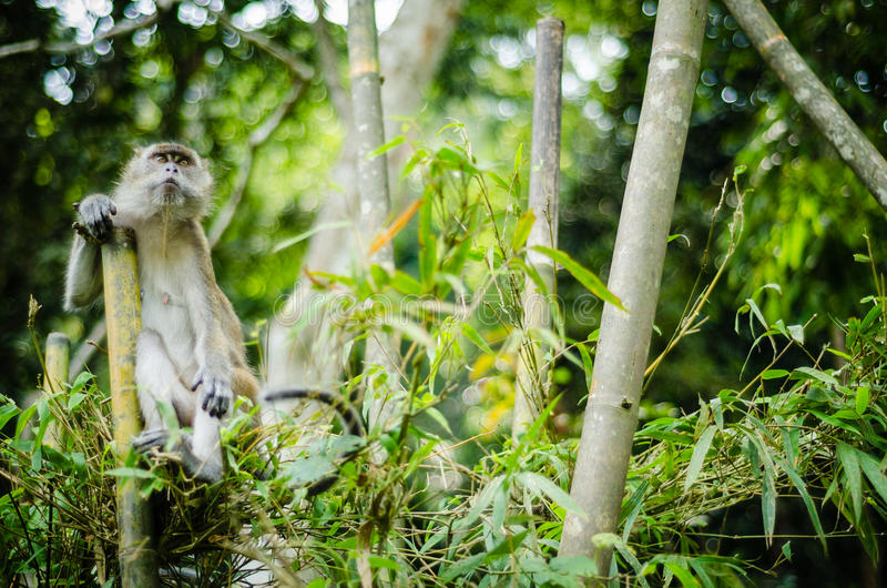 Monkey in jungle royalty free stock photos