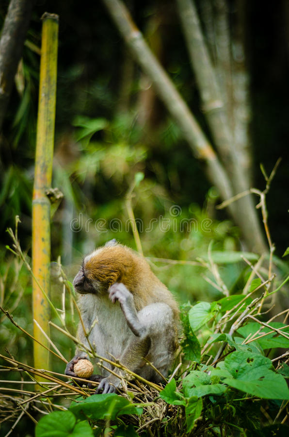 Monkey in jungle stock images