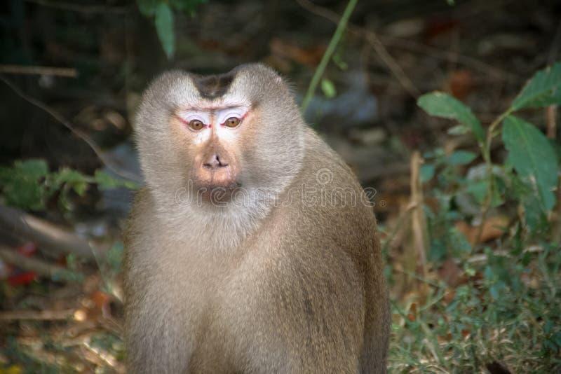 Monkey of Khao Yai stock images