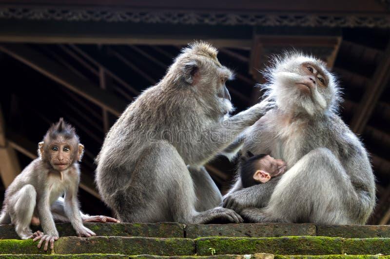 Monkey la famiglia immagine stock libera da diritti