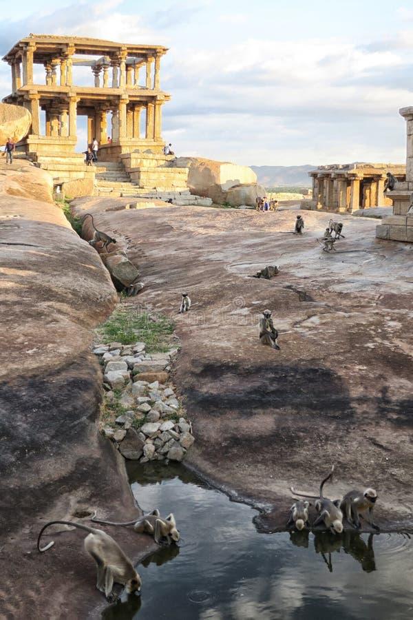 Monkey la famille parmi les ruines de la ville antique, Inde photo stock