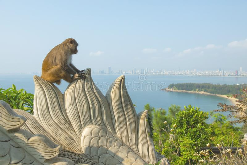 Monkey in Linh Ung temple sit on rock with Danang city and beach in backgrounds.  stock photo