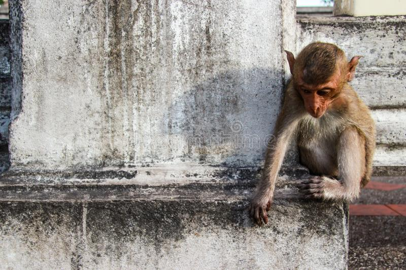 Monkey is lonely royalty free stock image