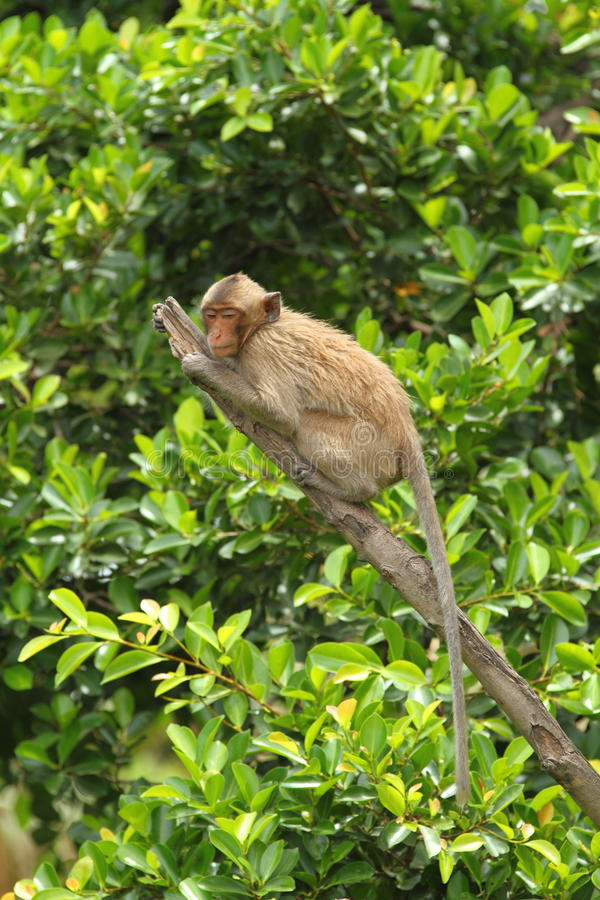 Monkey. This monkey look like relax on the tree stock images