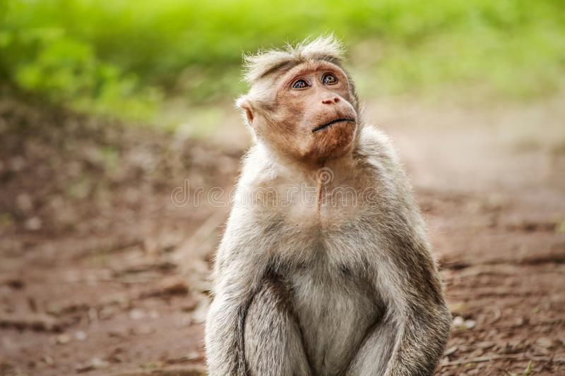 Monkey looking up with tears stock photos