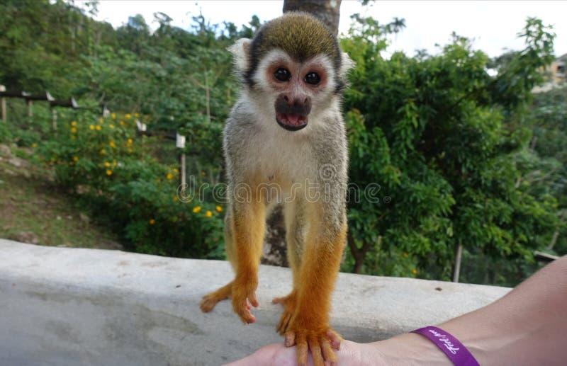 Monkey looks happy royalty free stock image
