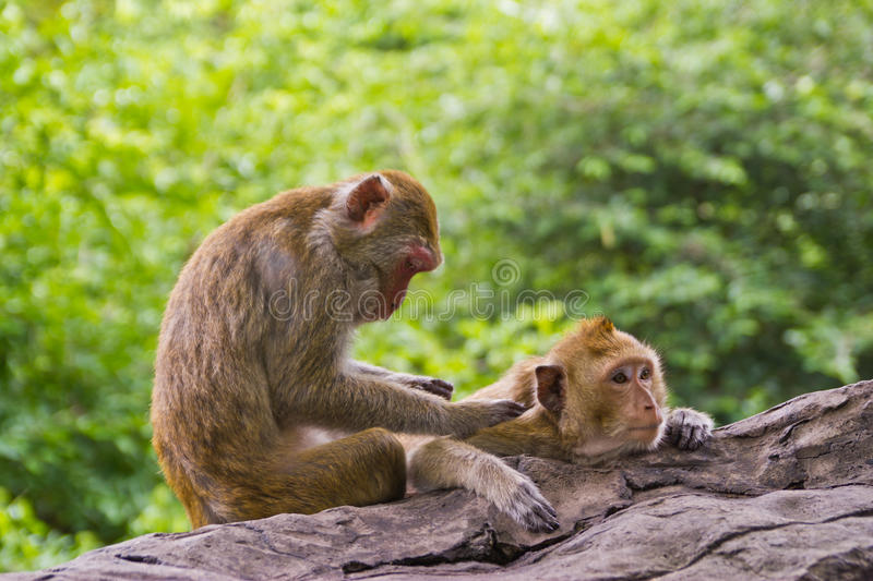 Download Monkey lover stock image. Image of friendship, beauty - 25720315