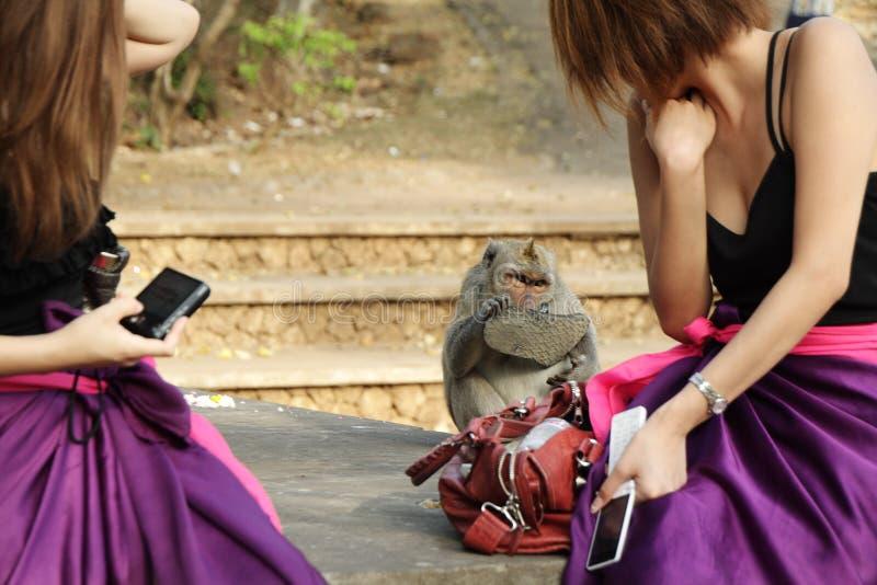 Monkey (Macaca fascicularis) playing royalty free stock photos