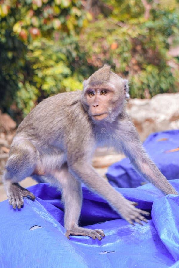 The Monkey meet us stock photos