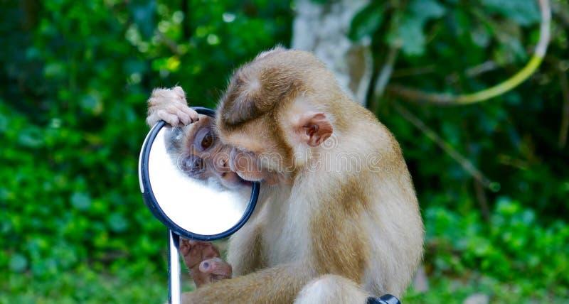 Monkey - mirror face royalty free stock photos