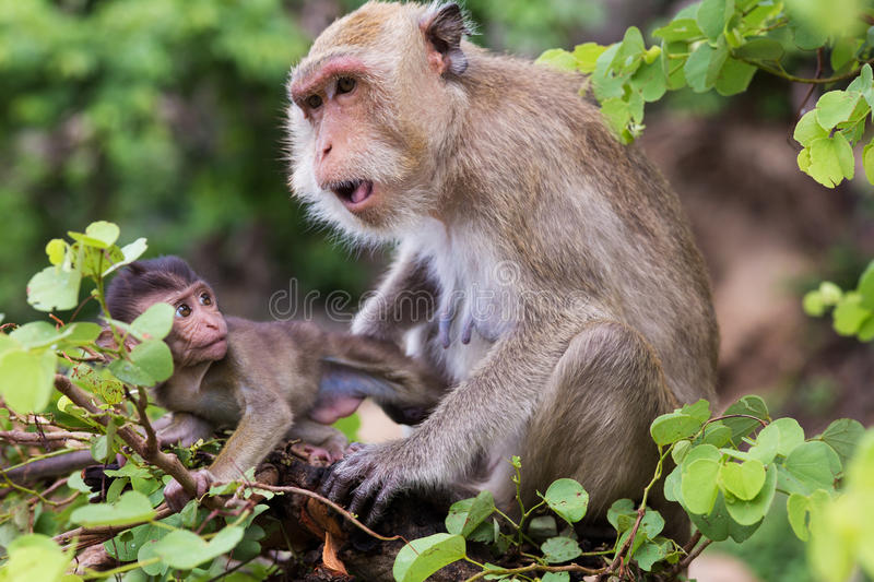 Download Monkey, mother with baby stock photo. Image of horizontal - 34187284
