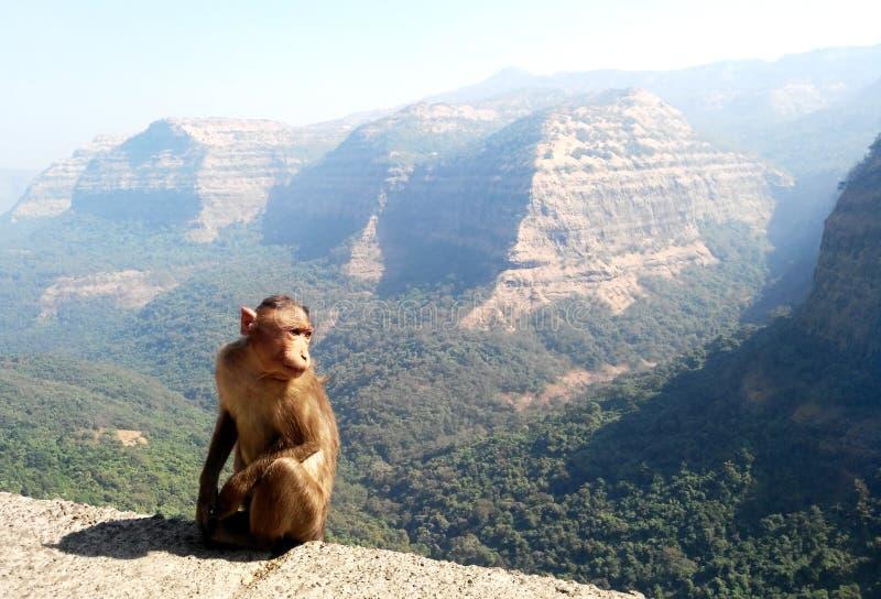Monkey with mountain landscape background stock photos