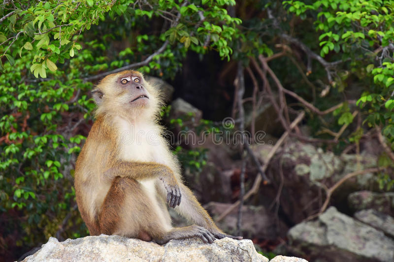 Monkey in the nature stock image