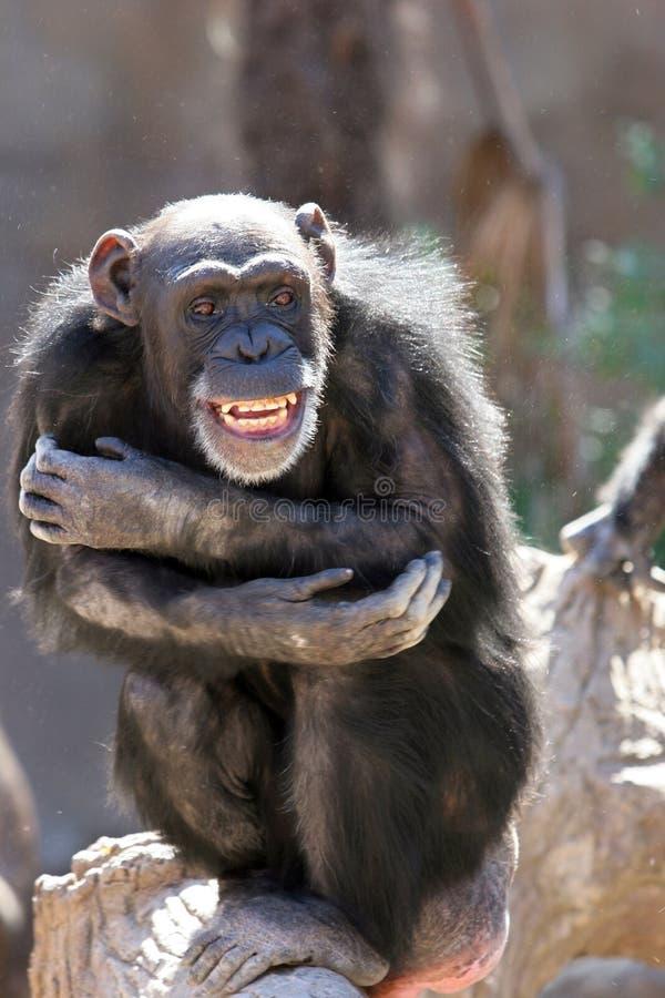 Monkey o riso e o arreganho em multidões no jardim zoológico foto de stock