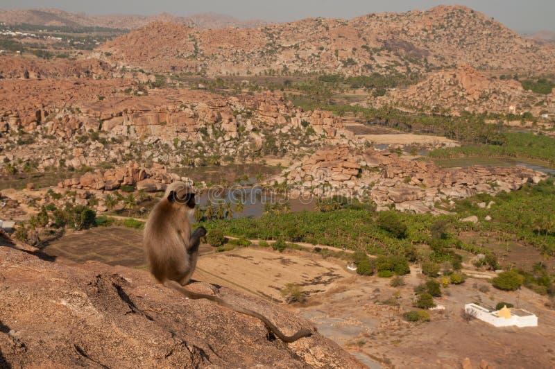 Monkey overlooking boulder landscape