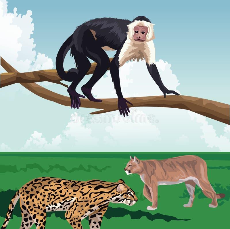 Monkey på grenar och leopardkattor i landskapet tropisk fauna och flora vektor illustrationer