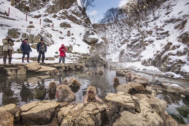Monkey Park. NAGANO - FEBRUARY 5: Tourist observe bathing monkeys at Jigokudani Monkey Park February 5, 2013 in Nagano, JP stock photography