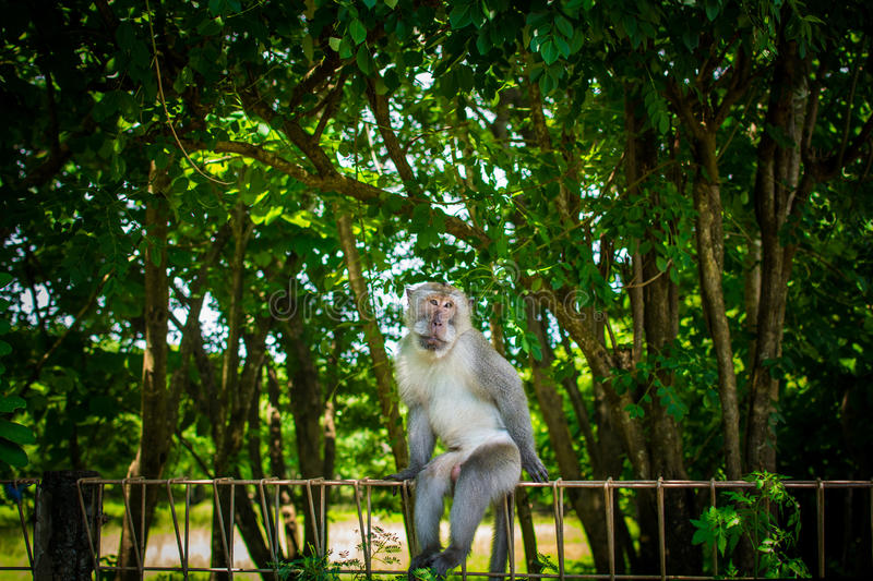 Monkey posing in the park stock photo