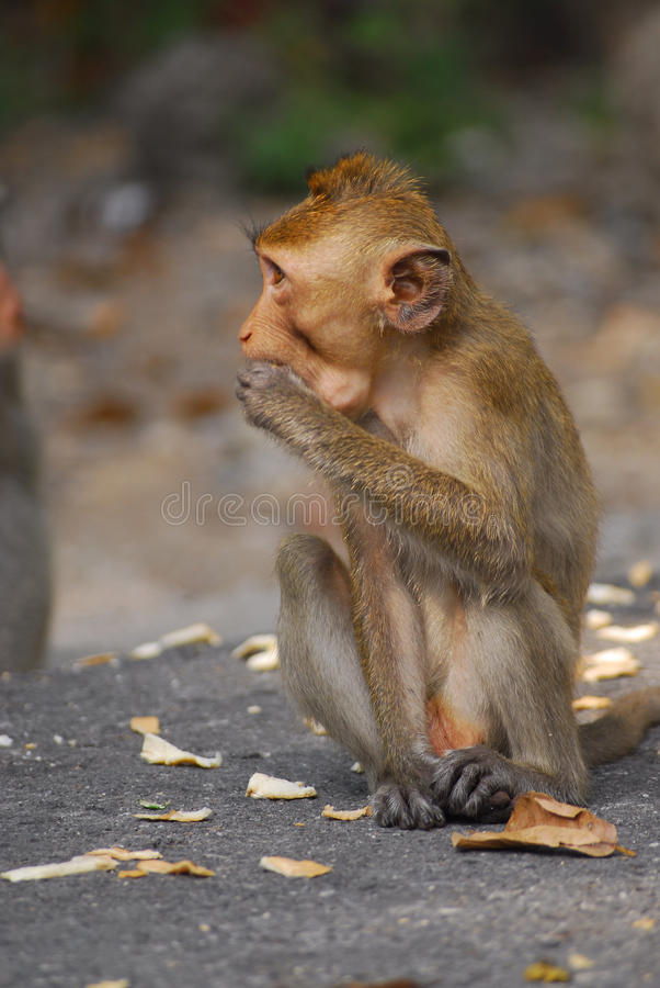 Monkey. While relaxing at natural park in thailand stock image