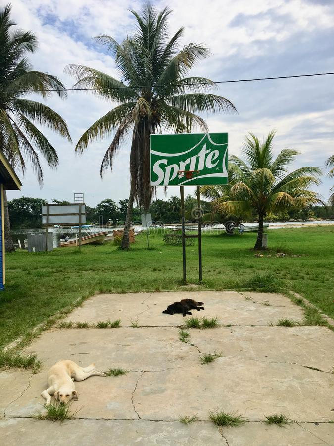 Monkey River Town, Belize - May 28th, 2018: two stray dogs lay o royalty free stock images