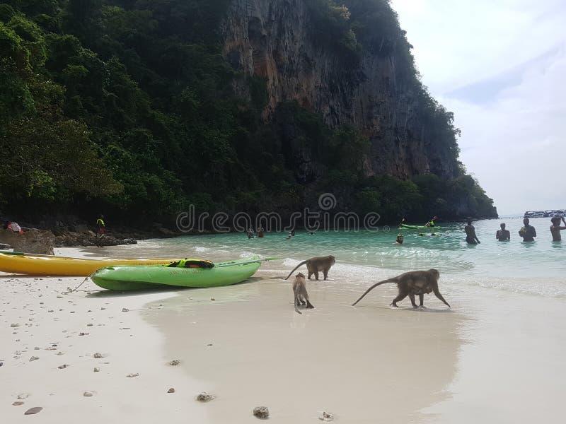 Monkey& x27;s beach 1 royalty free stock photography