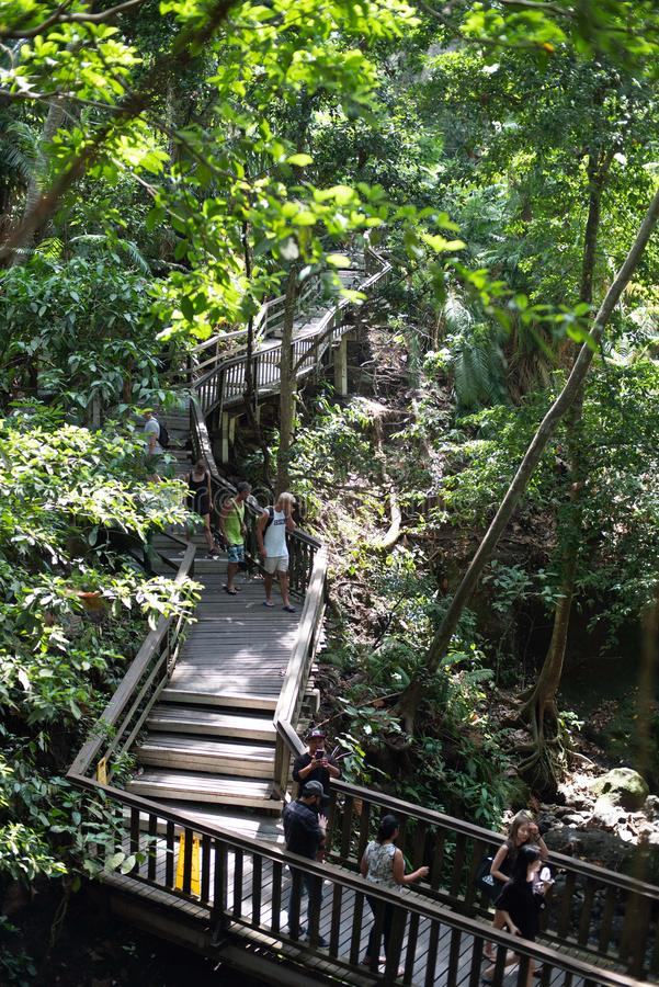 Monkey Forest in Ubud, Bali Indonesia royalty free stock photos