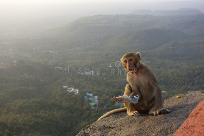 Monkey se reposer au bâti Popa à Mandalay Myanmar image libre de droits