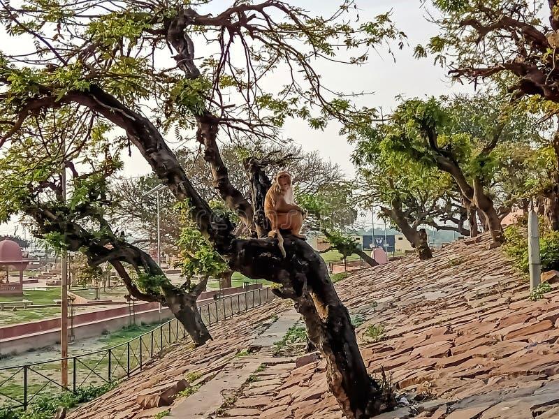 Monkey sit on tree awesome image india royalty free stock photography