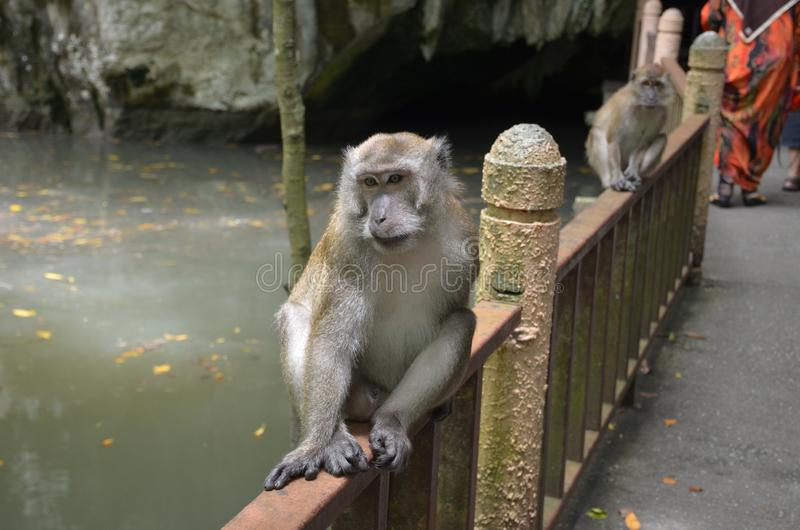 The monkey sits on the railing near the cave entrance next to the river stock photos
