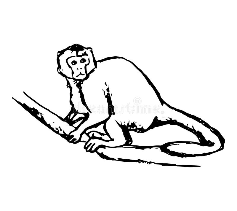 Monkey sitting on a branch vector illustration