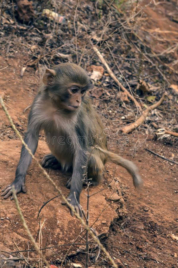 Monkey sitting on the ground in the dark tropic forest. Grey color baby cute little monkey sitting on the ground in the dark tropic forest. Looking away from stock images