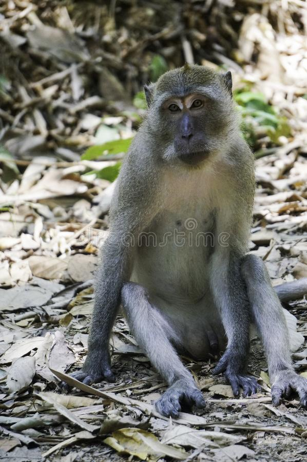 A monkey is sitting on the ground. In the jungle stock photo