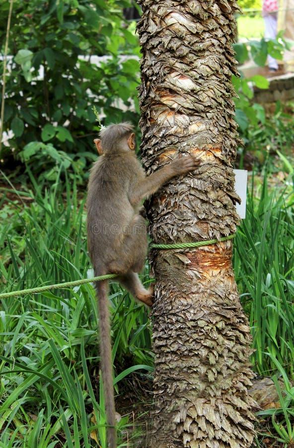 Monkey sitting on the rope stock photo