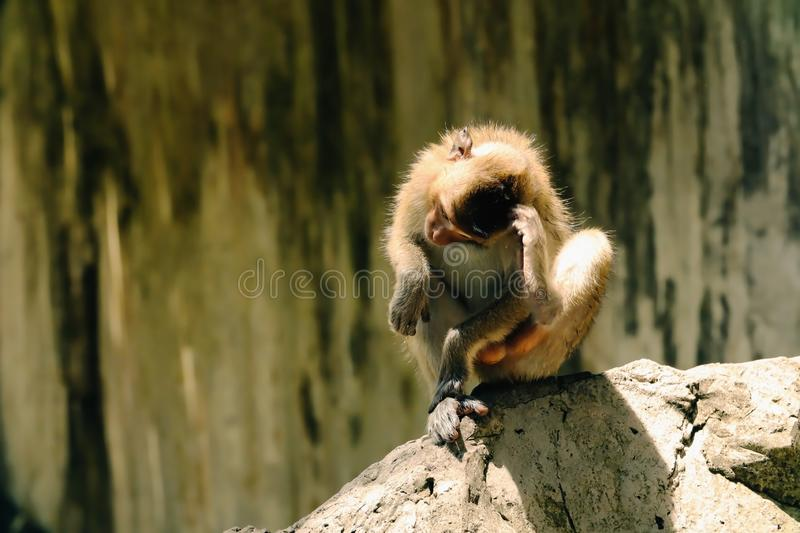 The monkey is sitting royalty free stock photo