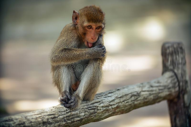 The monkey is sitting on the side of the fence. In the garden royalty free stock images