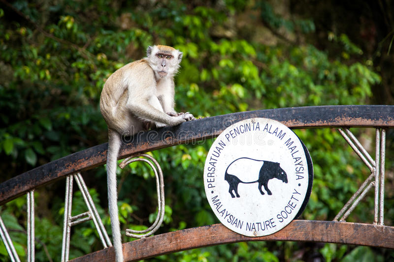 Monkey is sitting on sign to the temple cave in Batu Caves stock photo