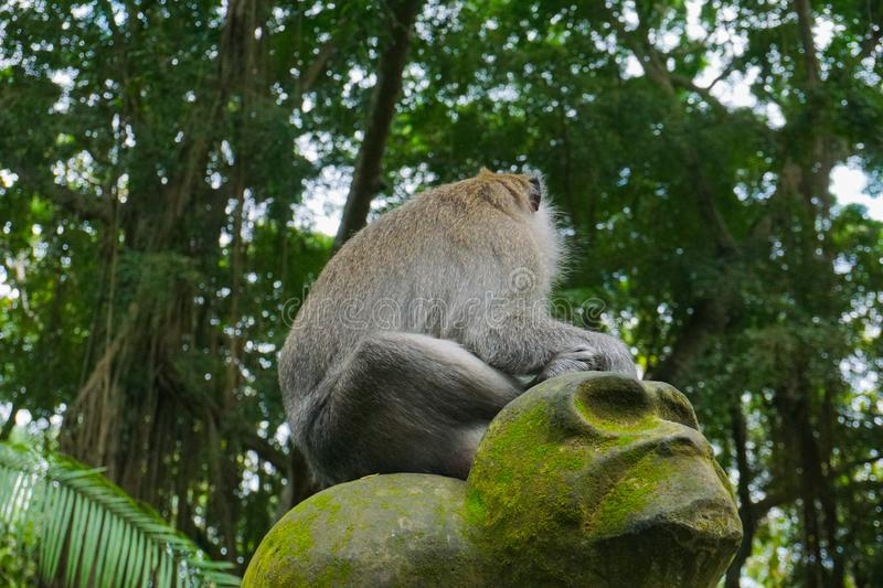 Monkey sitting on a stone sculpture at sacred monkey forest in Ubud, island Bali, Indonesia royalty free stock photo