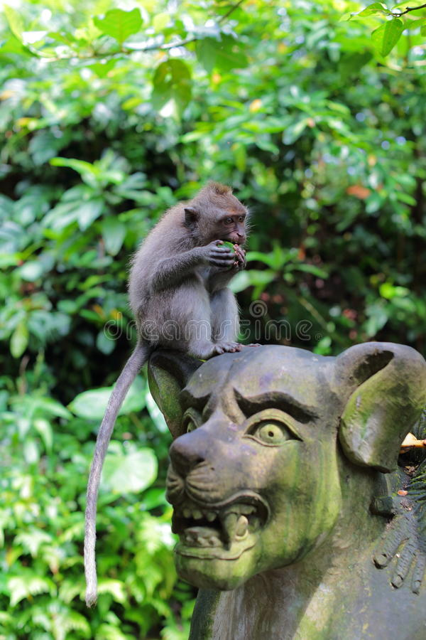 Monkey Sitting on Stone Statue. A monkey in Monkey Forest, Ubud, sitting on top of a stone statue, eating fruits stock photos