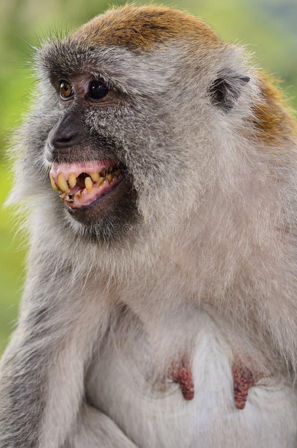 Hahaha I love big smiles :D | Smiling animals, Happy ... |Monkey Big Smile